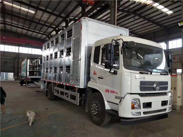 东风天锦全铝合金猪苗运输车,猪肉涨价了,负责配送的车都变高档了
