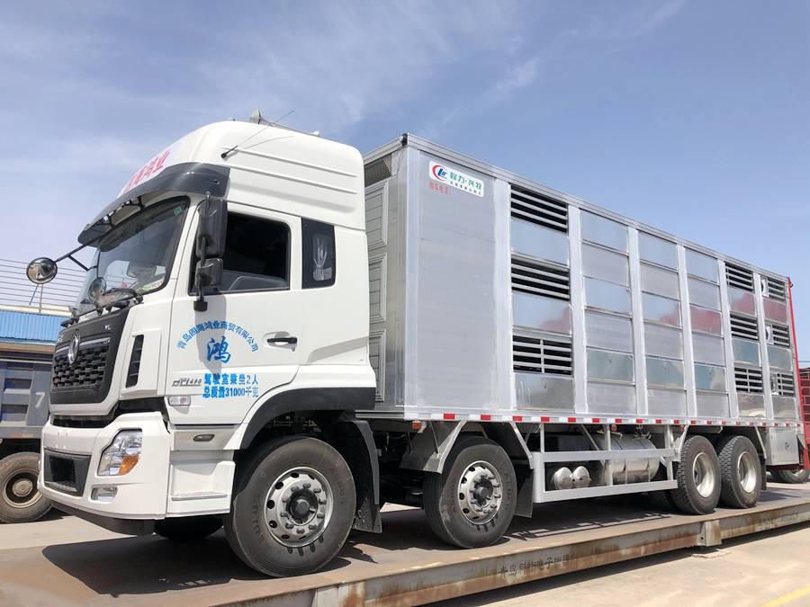 鲜活畜禽运输车,什么价格?天龙VL载货车底盘的畜禽运输车实拍