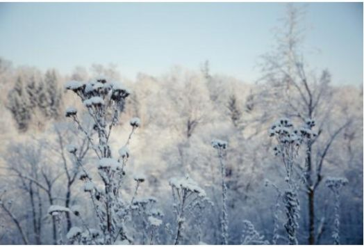 盼初雪 不如和福特撼路者一起去雪地撒野