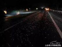 货车马路飘洒废铁致十几辆车被扎爆胎