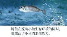 【他山之石】27万的特斯拉:当鲶鱼变成鲨鱼